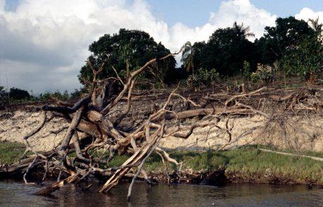 Une étude estime que la forêt amazonienne aura disparu dans 50 ans