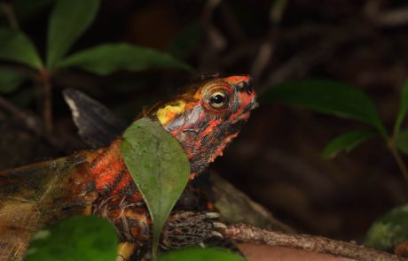 """Japon : des tortues """"en danger"""" probablement volées d'un zoo d'Okinawa"""
