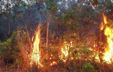 Les incendies dans la forêt amazonienne du Brésil ont augmenté en juillet