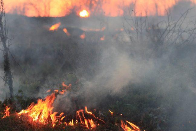 Bolivie : les animaux, premières victimes des incendies de la forêt amazonienne