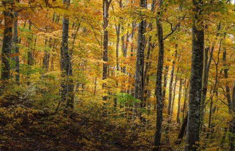 Forêt : La récolte de bois est-elle compatible avec la biodiversité en forêt ?