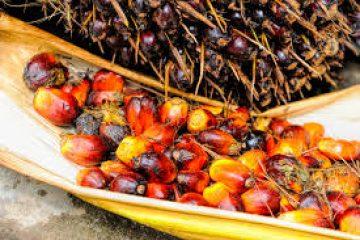 L'Indonésie dépose plainte auprès de l'OMC contre l'UE les limitations du bloc au regard de l'huile de palme