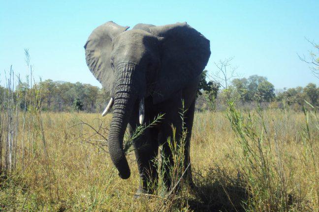 Le Malawi renforce la lutte contre les braconniers