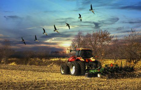 Les populations d'oiseaux déclinent dangereusement dans les campagnes françaises