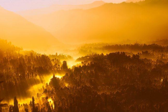 Indonésie : découverte d'une nouvelle espèce d'orang-outan