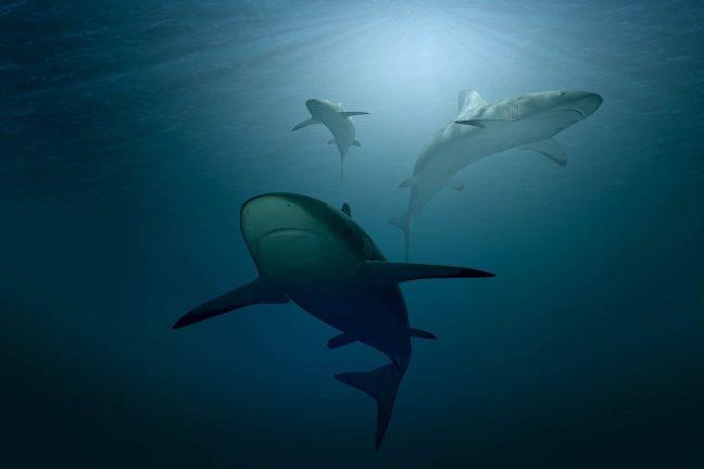 Selon l'UICN, les océans sont en manque d'oxygène