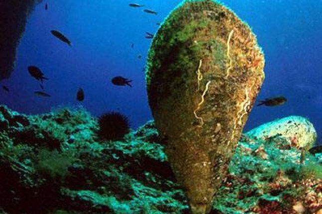 Des biologistes croates craignent l'extinction de la plus grosse palourde méditerranéenne