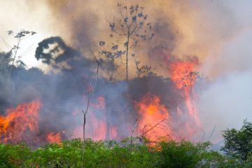 Le Brésil lance des opérations militaires pour protéger la forêt amazonienne