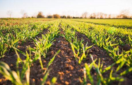 La France veut réduire sa dépendance aux importations de protéines végétales