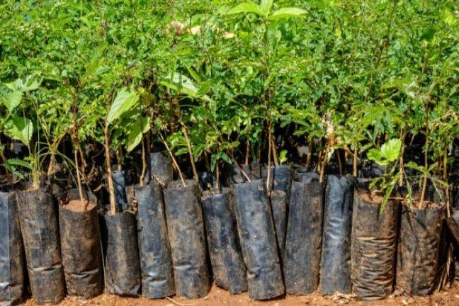 Plant-for-the-Planet : une application pour favoriser le reboisement des forêts