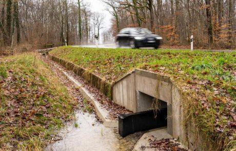 La capitale estonienne ferme la route pour que les grenouilles et les crapauds reproducteurs puissent se croiser