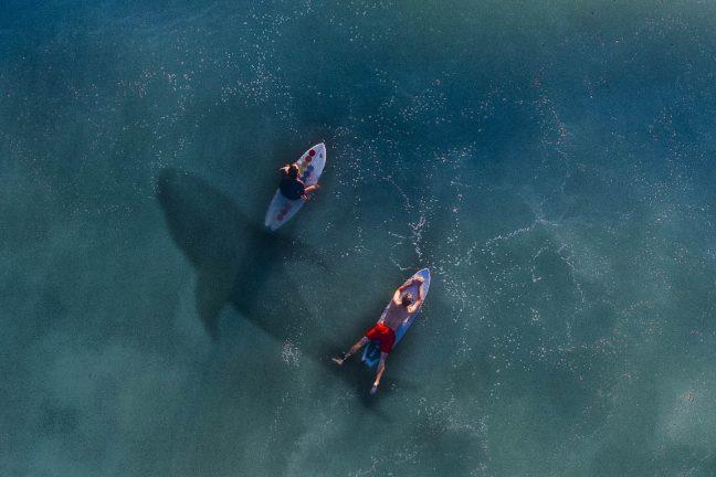 Les drones pour prévenir les attaques de requins