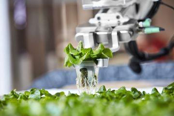 Et si l'avenir de l'agriculture était dans la robotique ?