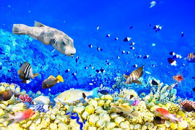 La santé d'un vaste récif méso-américain s'est aggravée après des années d'amélioration