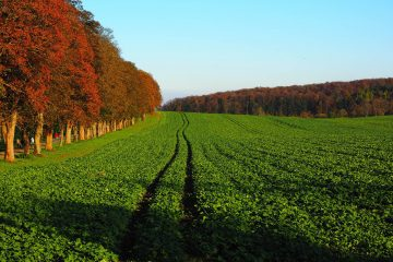 L'agriculture biologique gagne du terrain en France