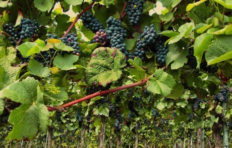 Gironde : un non-lieu prononcé dans l'affaire de l'épandage de fongicide de deux domaines viticoles